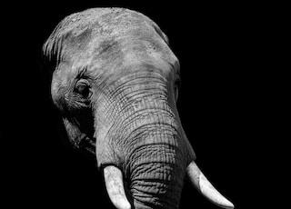 elephant during daytime