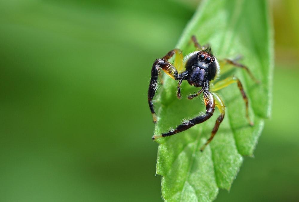Closeup of spider crawling on a green leaf