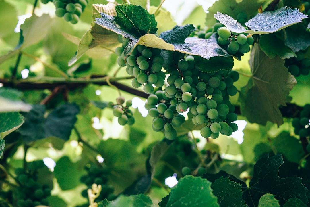 round green fruit closeup photography