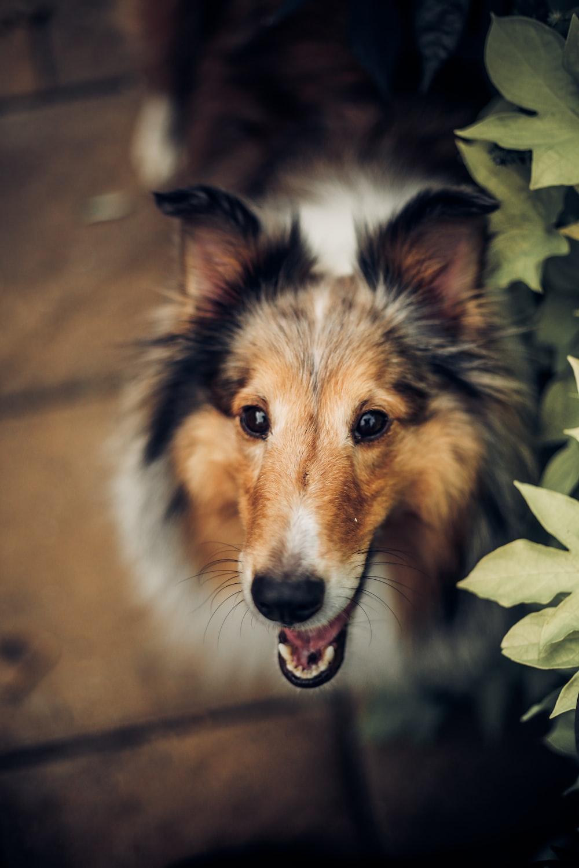 selective focus photography of short-coated dog near leaf