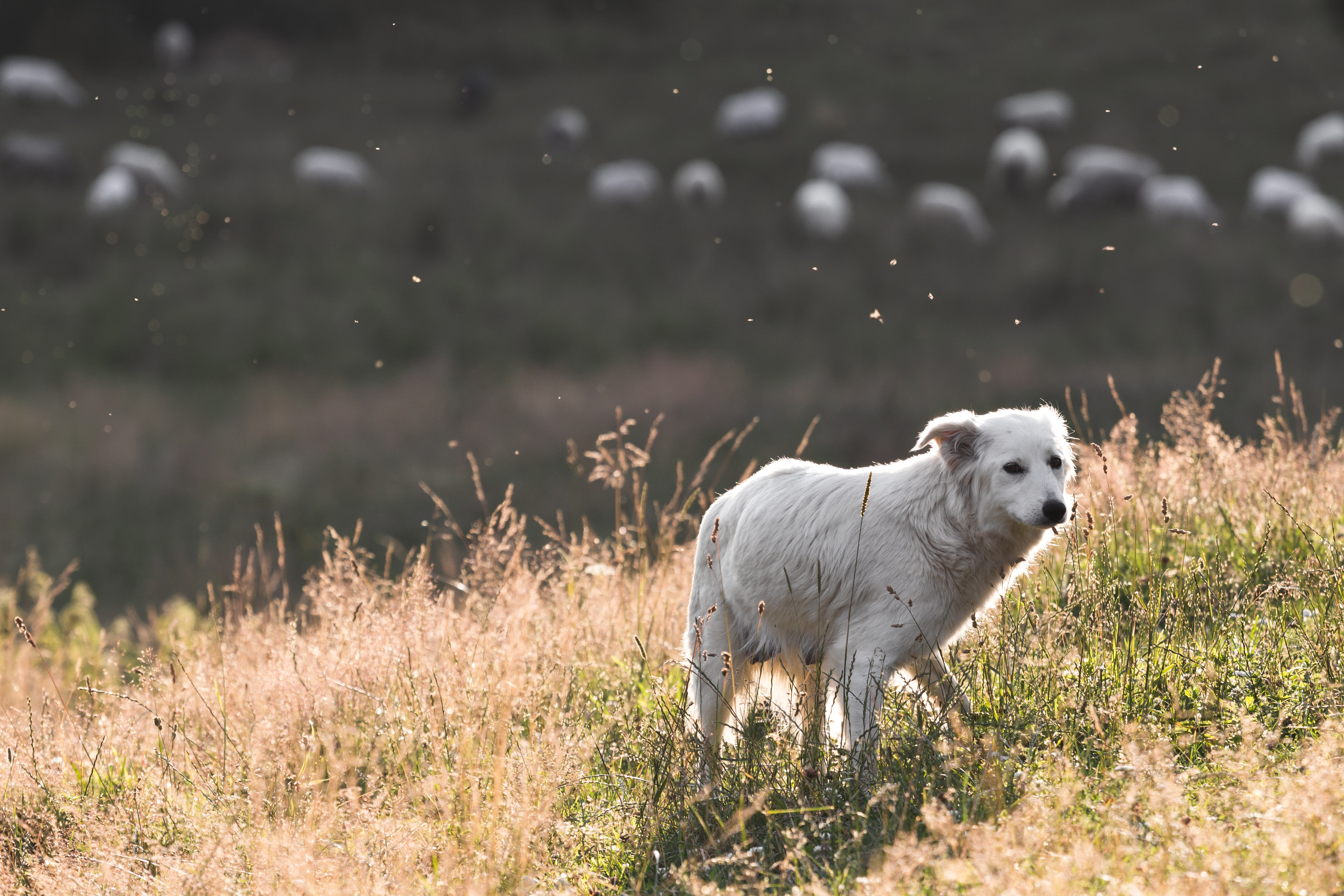 short-coated white dog standing on open field at daytime