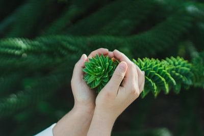 person cupping pine leaves during daytime