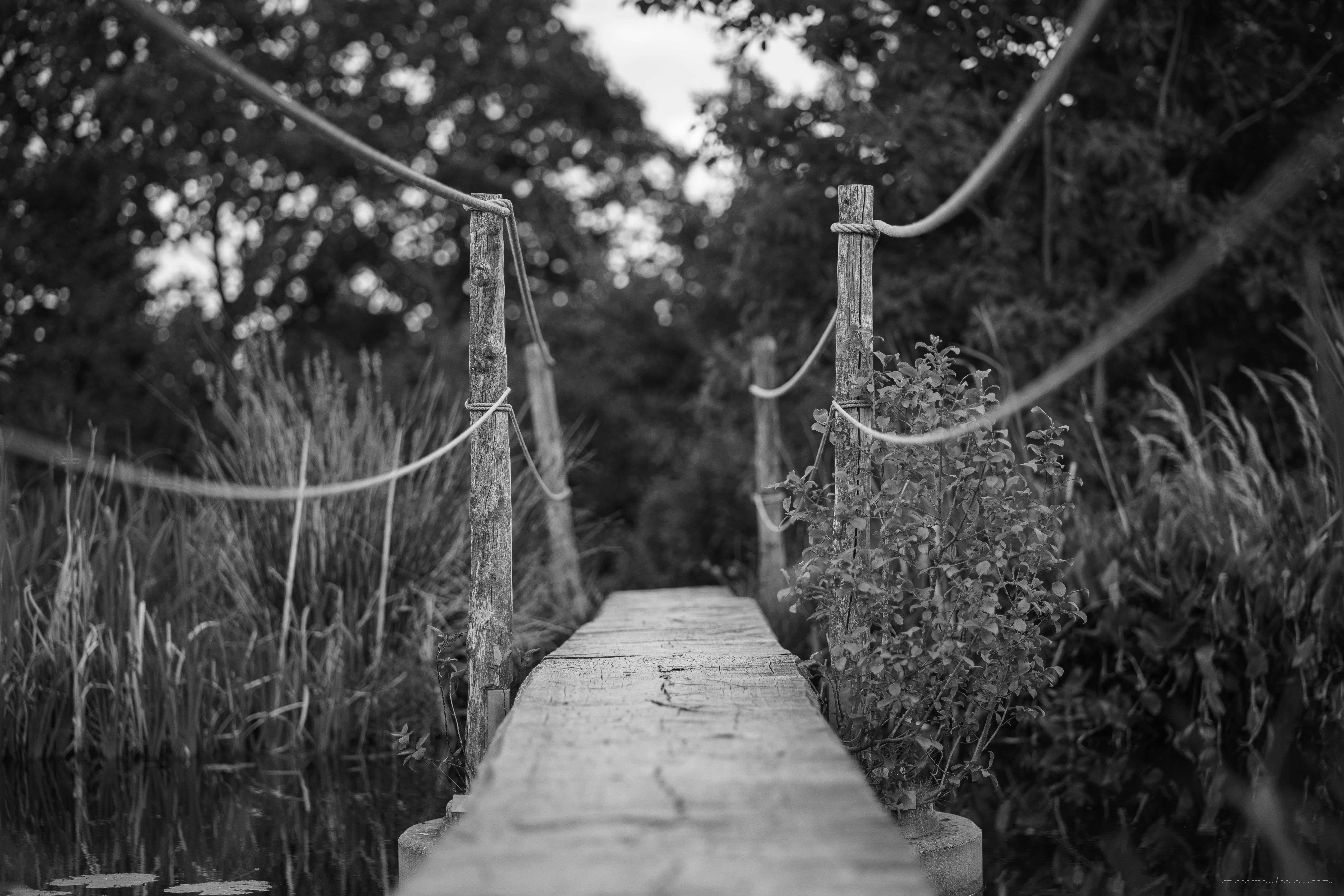 grayscale photo of a wooden hanging bridge