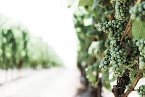 4685. Bor,szőlő, borászatok