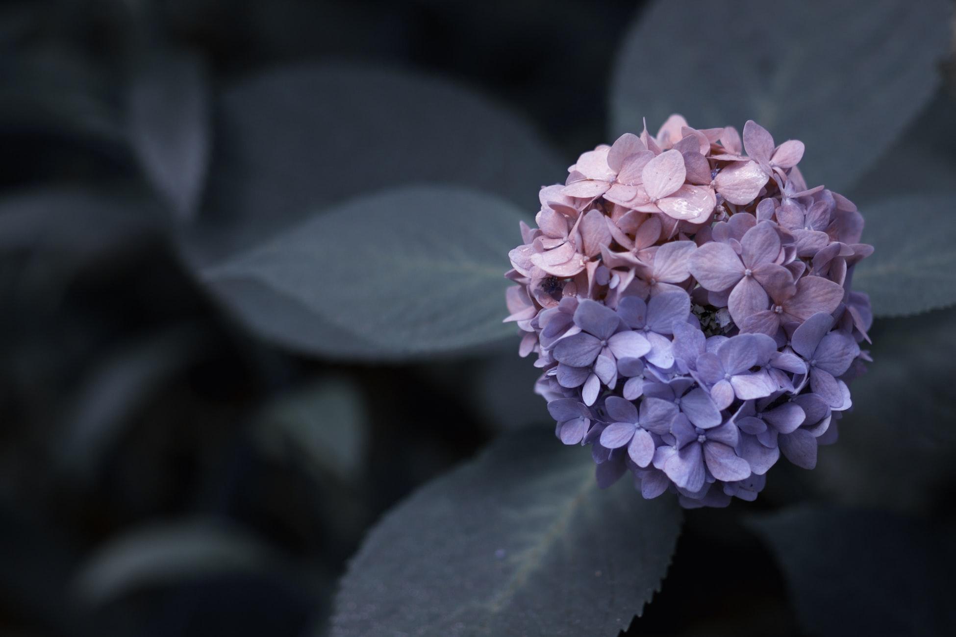 untitled - flowers by Wyatt Ryan