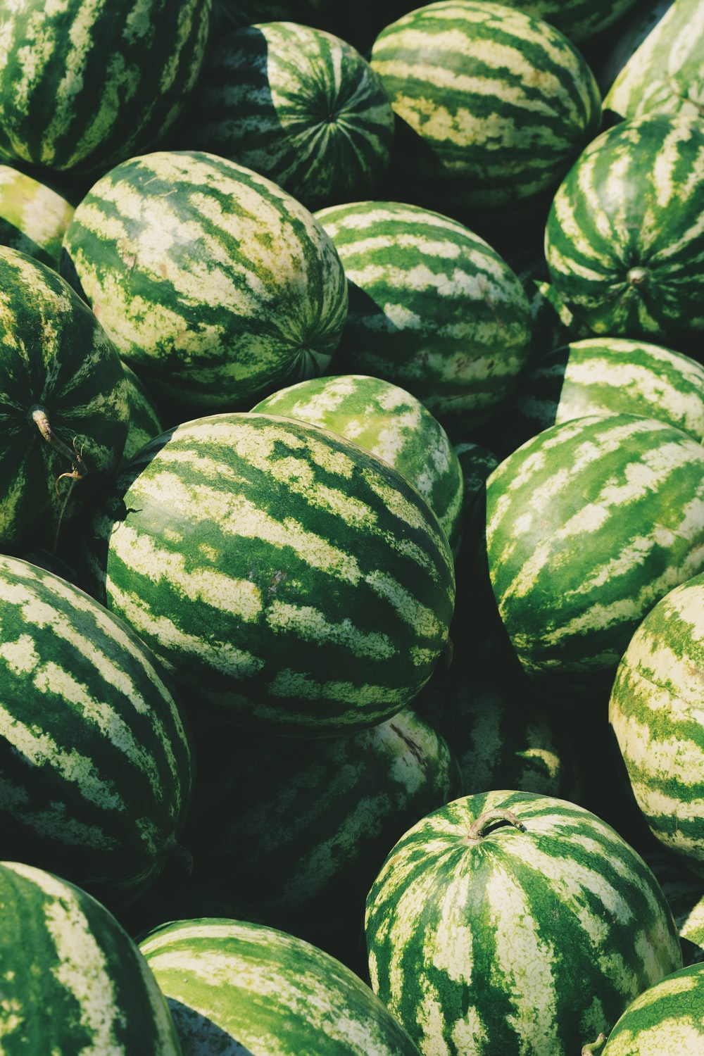 watermelon lot
