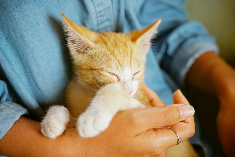 person holding orange tabby kitten