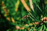 yellow and black bee on green leafed plant photography