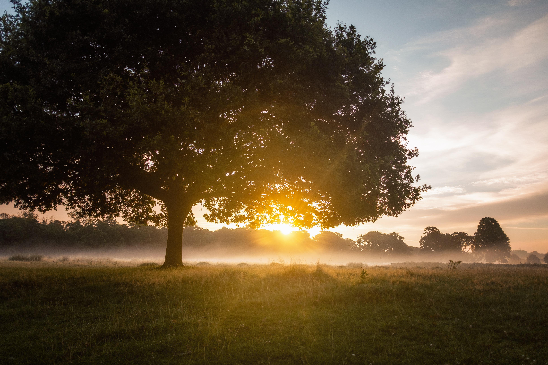 tree against golden sun