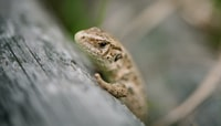 selective focus photography of gecko