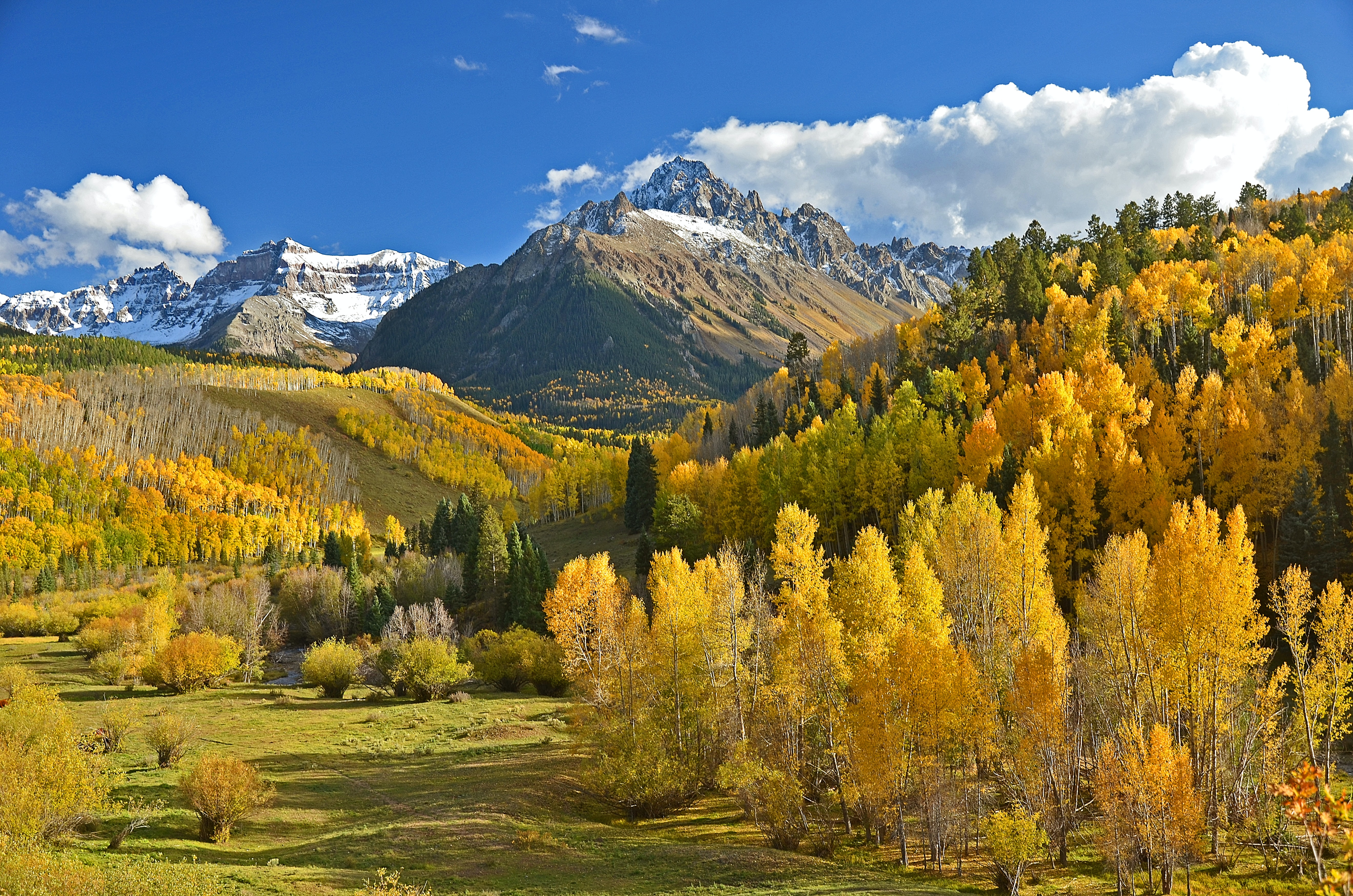 Scenic yellow and orange trees in a hilled forest near mountains.