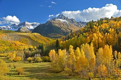green and beige trees beside mountains colorado teams background