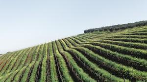 4665. Bor,szőlő, borászatok