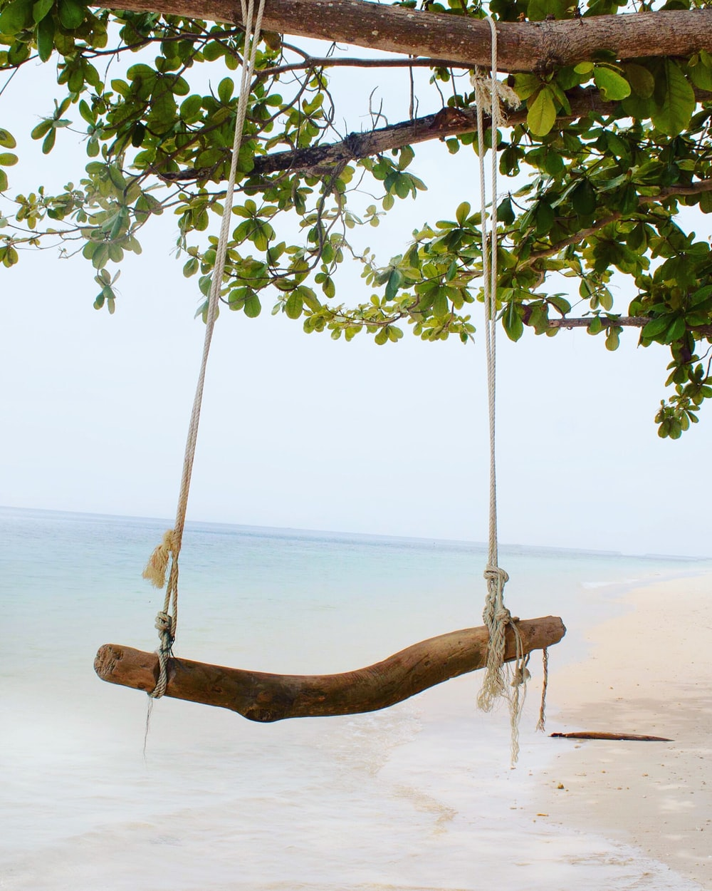 brown swing bench made out of tree trunk near the seashore