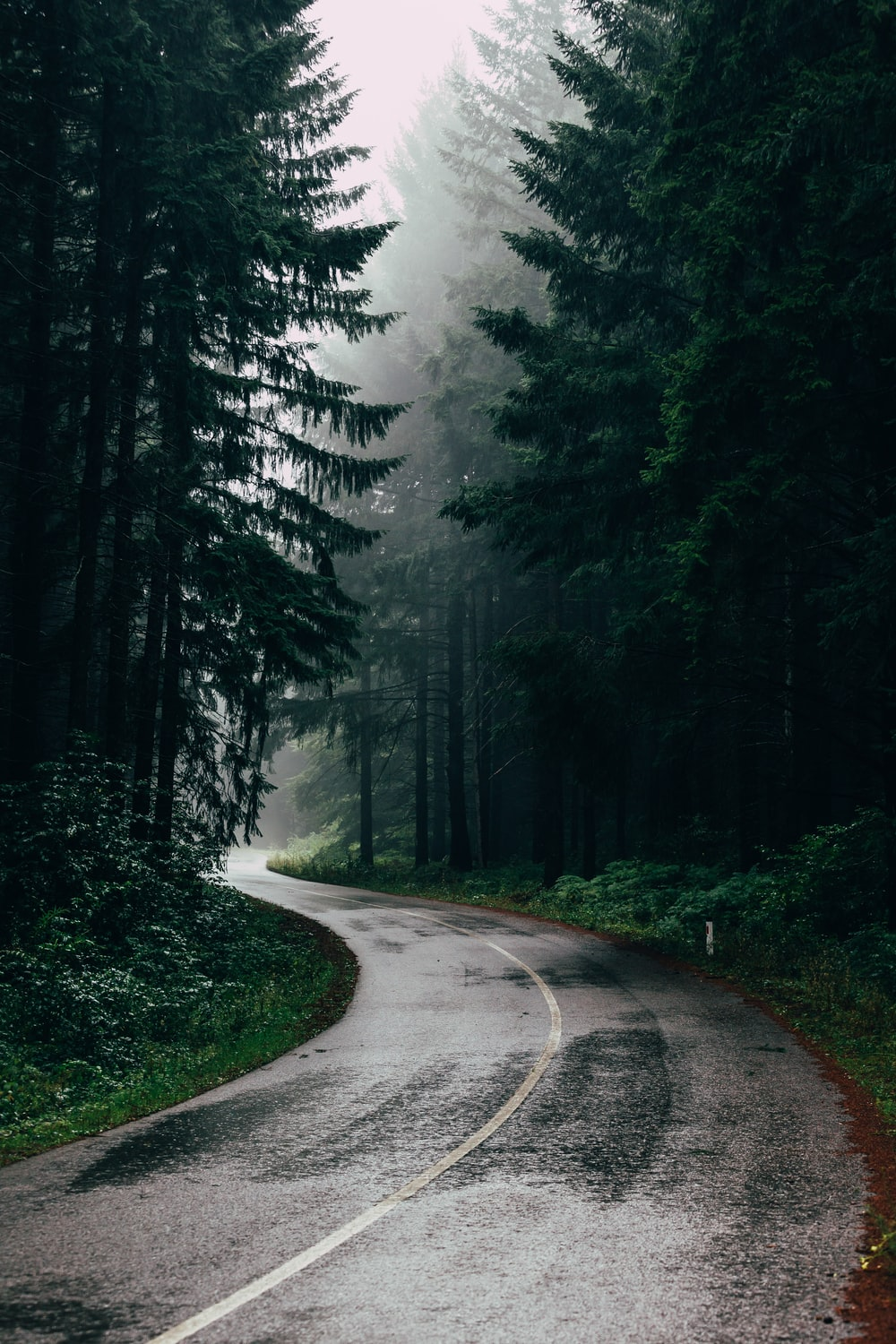 Rain Pictures Hd Download Free Images Stock Photos On Unsplash