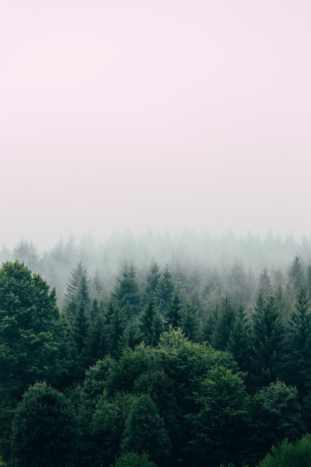 Snow Pine Tree Png