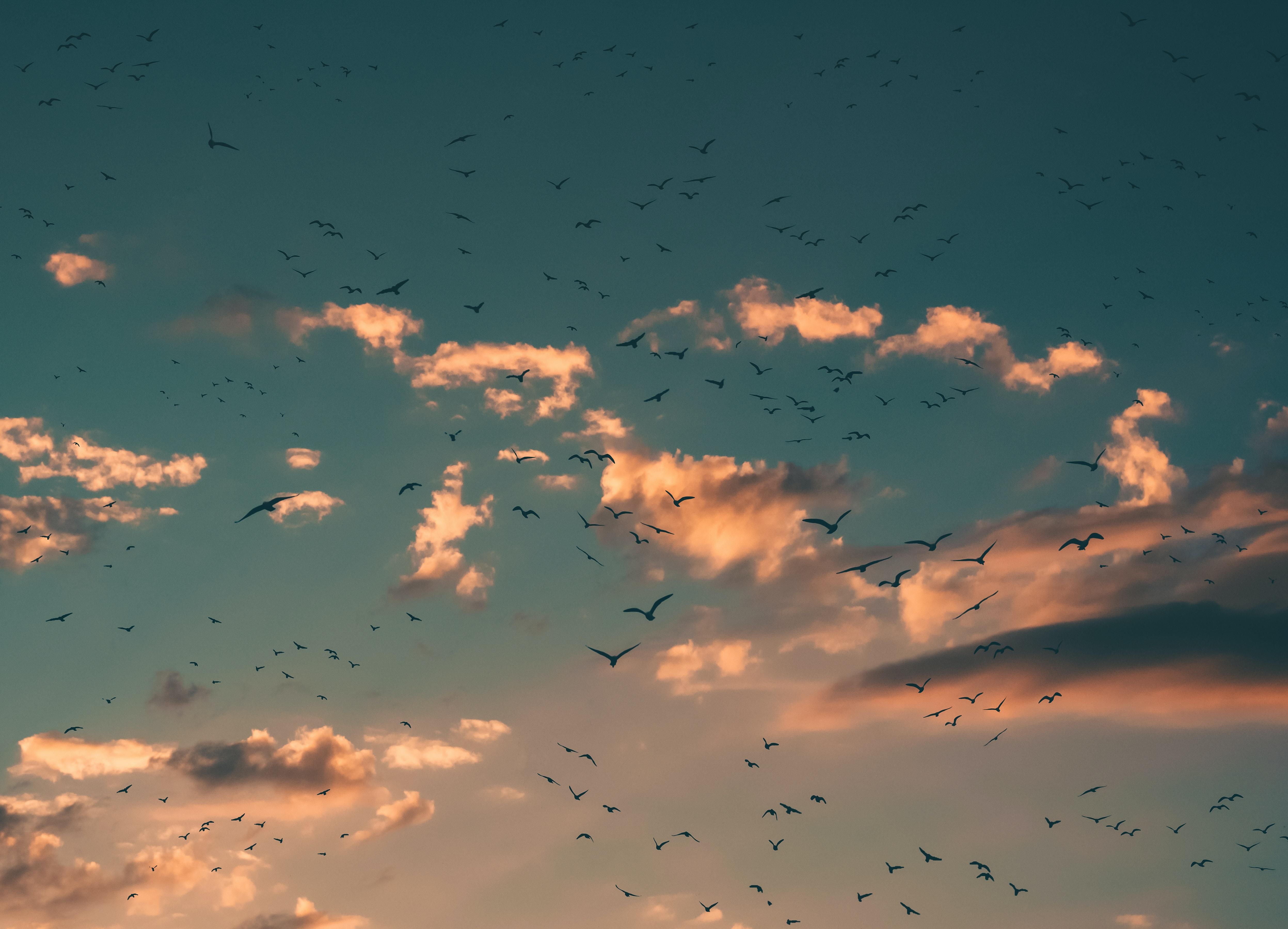 flying birds during sunset