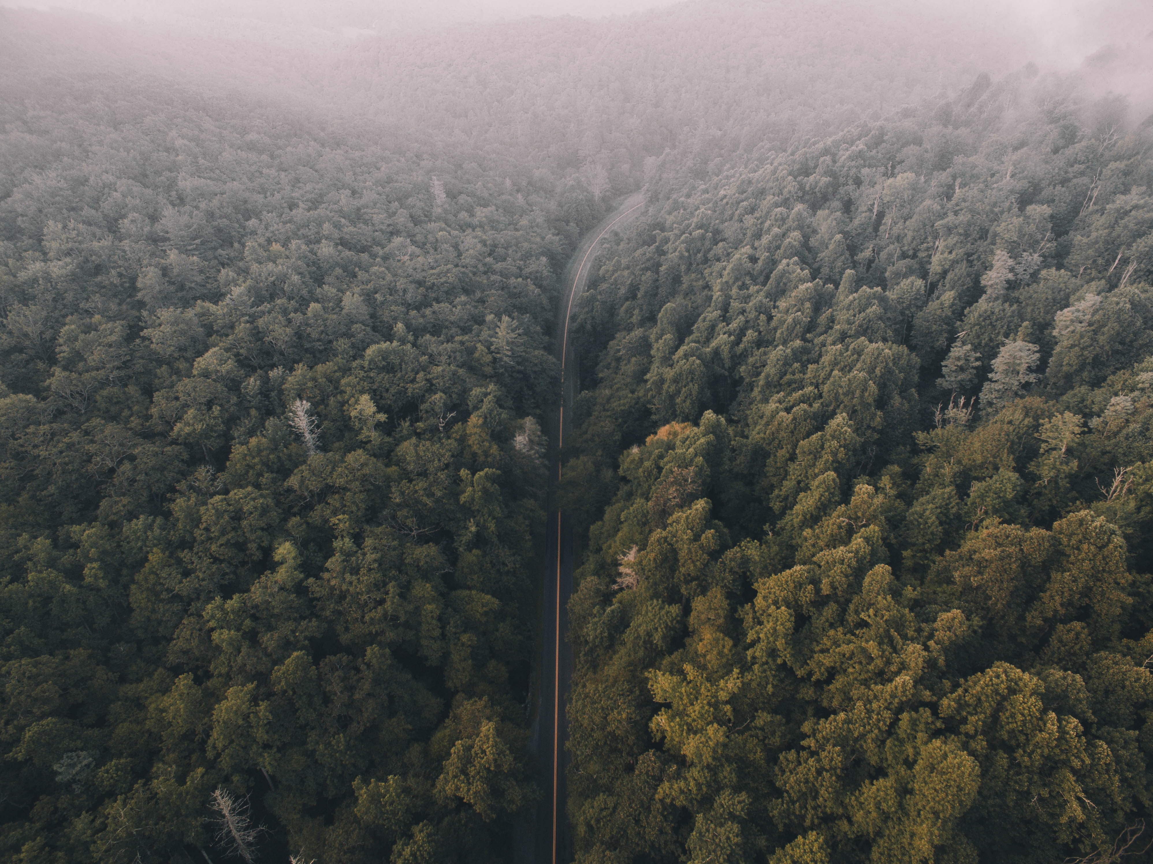 Narrow road cuts through a lush green forest covered in fog