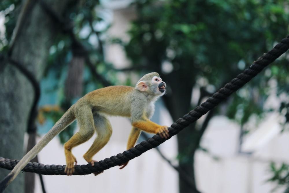 white monkey climbing on a black rope