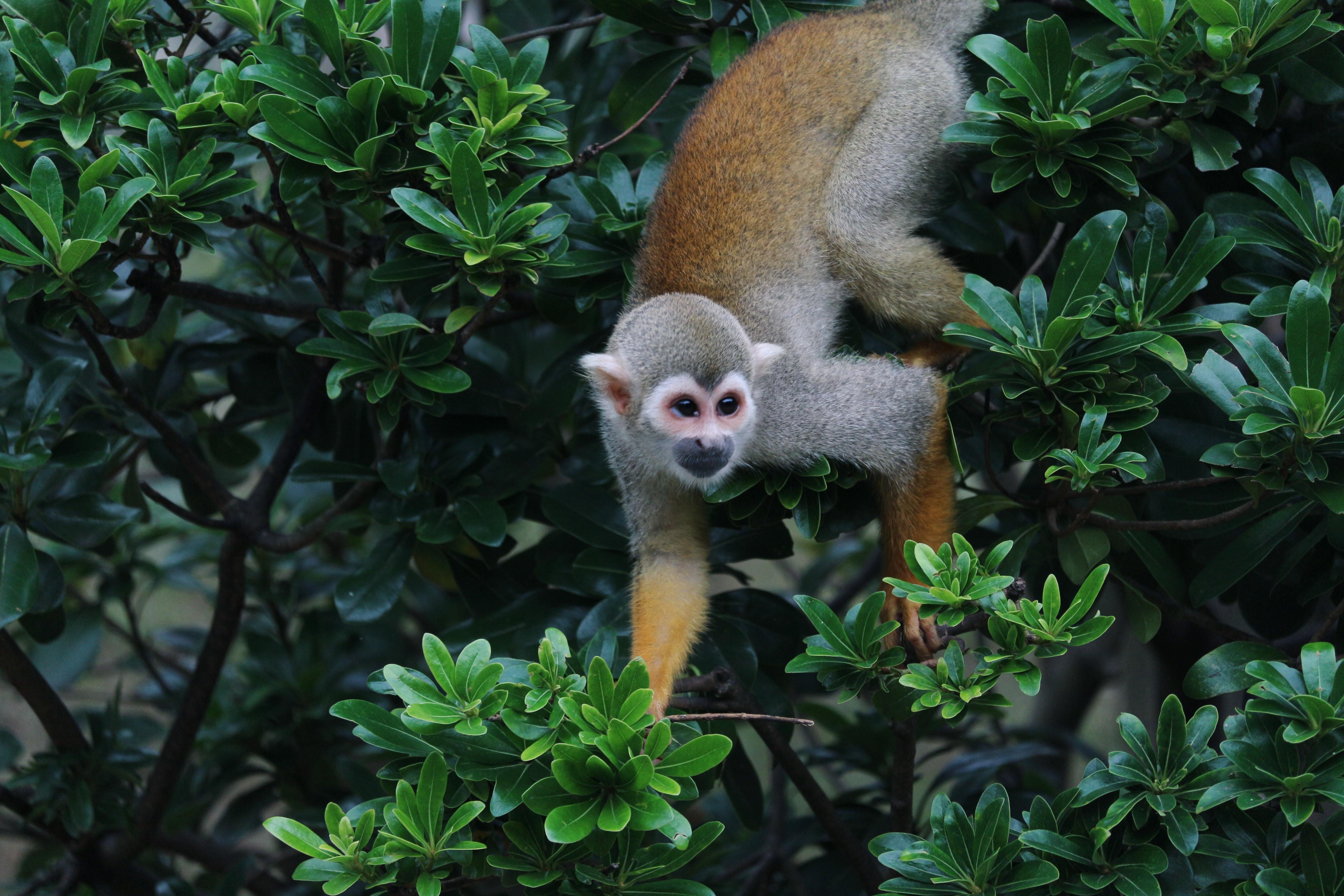 brown monkey crawling on green plants