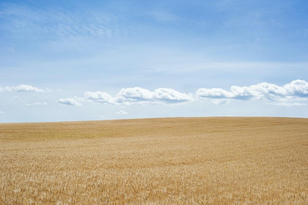 desert under blue skies