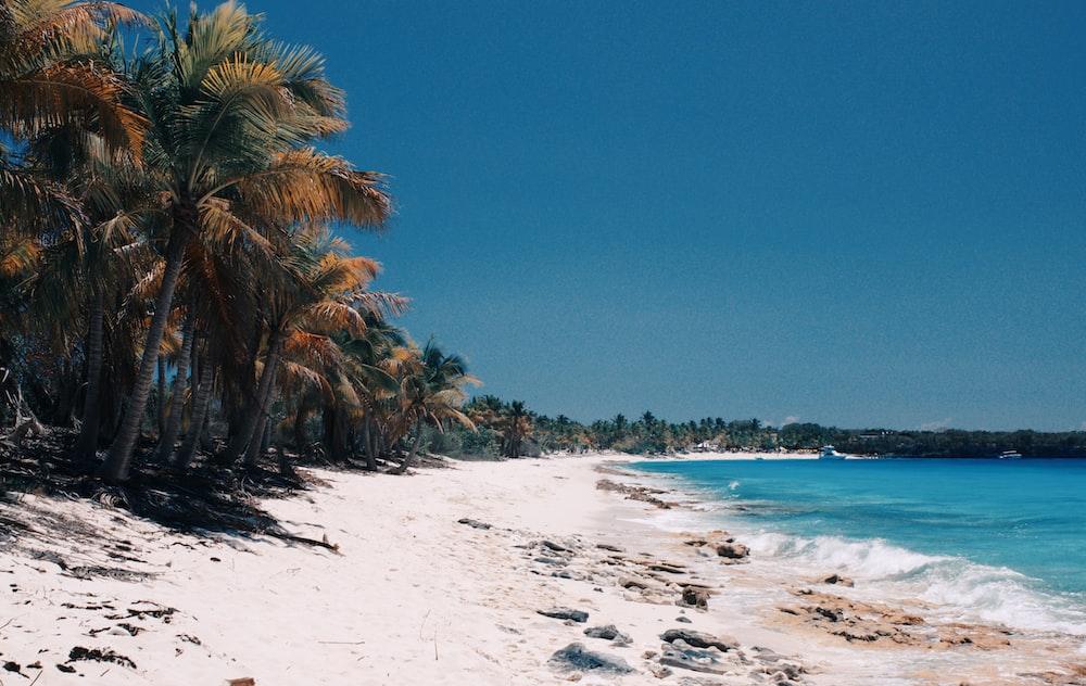 ocean beside of sandbank