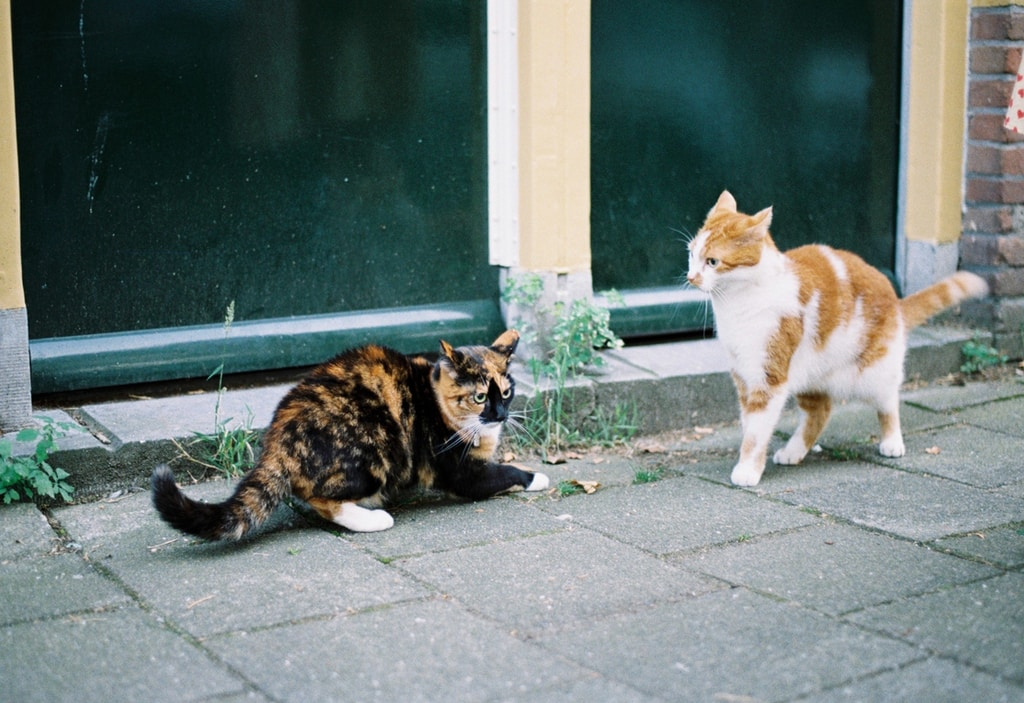 calico cat and calico cat on gray concrete floor