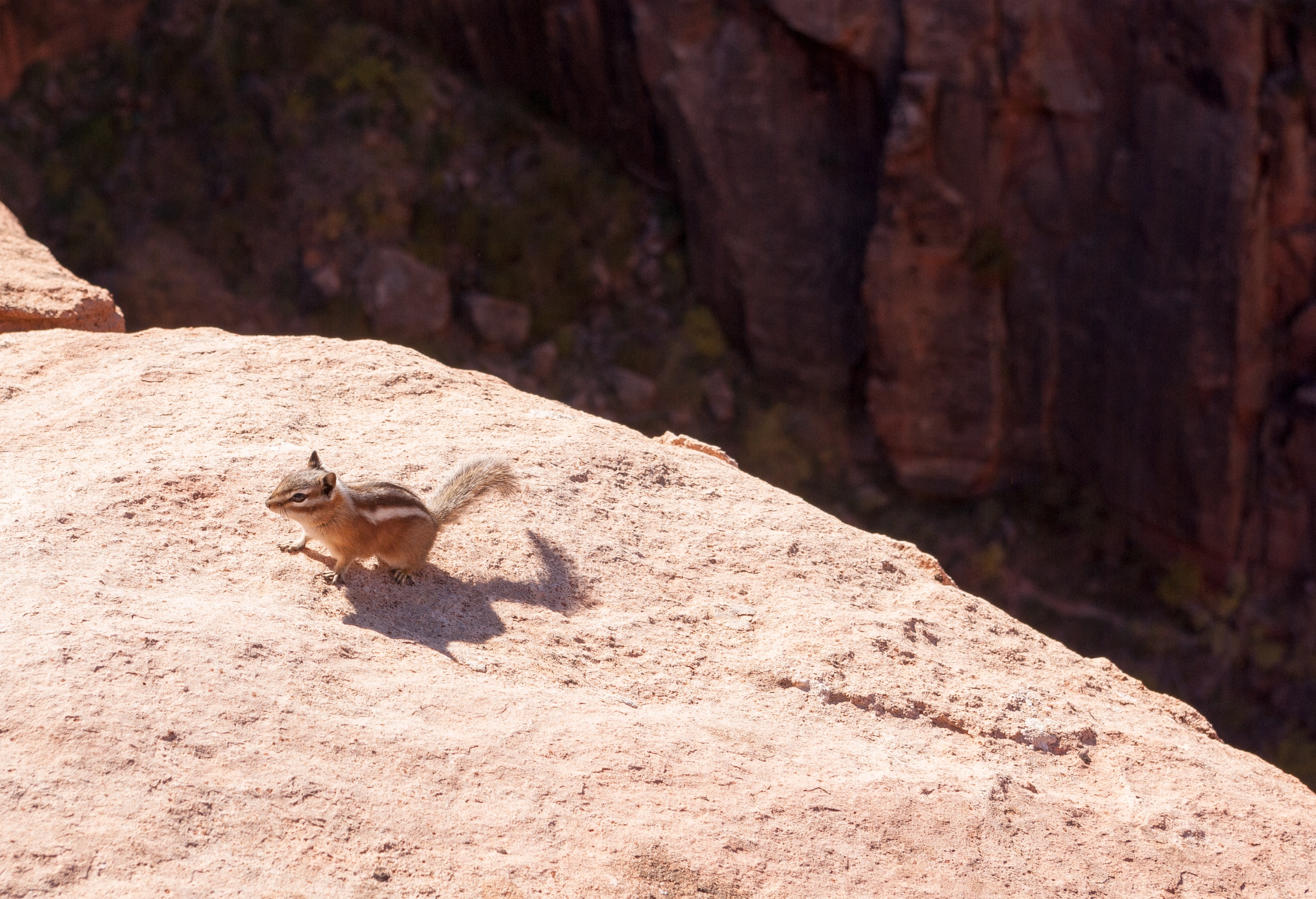 squirrel on cliff