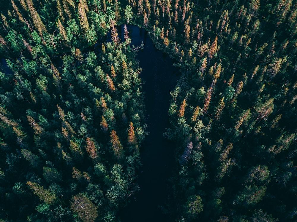 birds eye view of river between trees