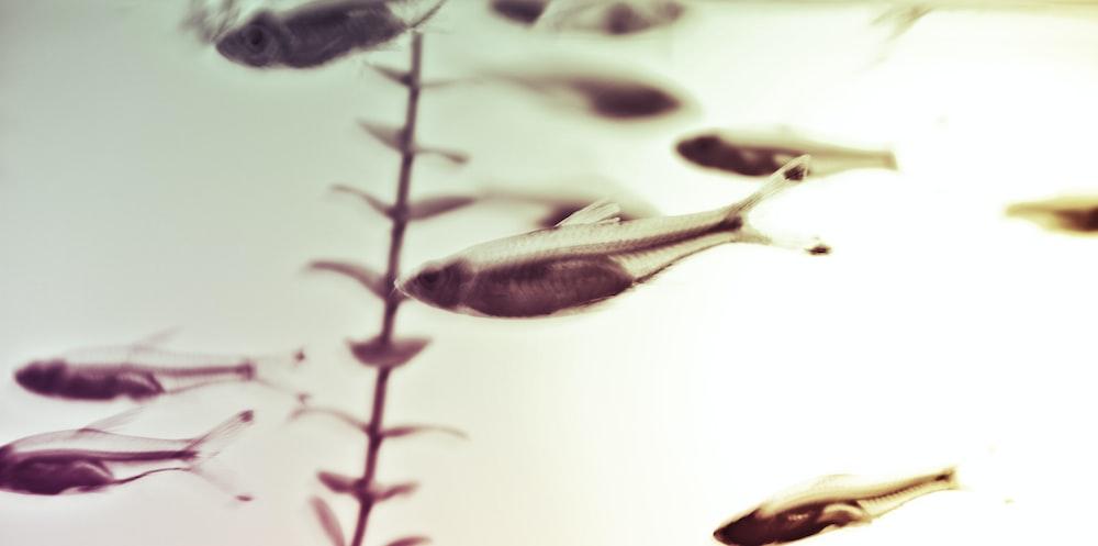 macro photography of fish fingerlings