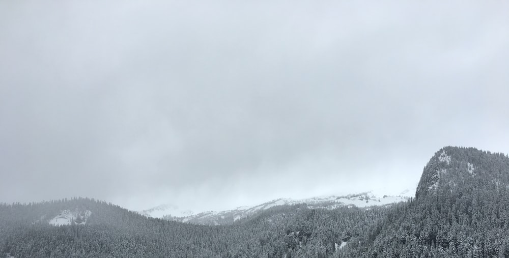 grayscale photo of trees in front of mountain alps