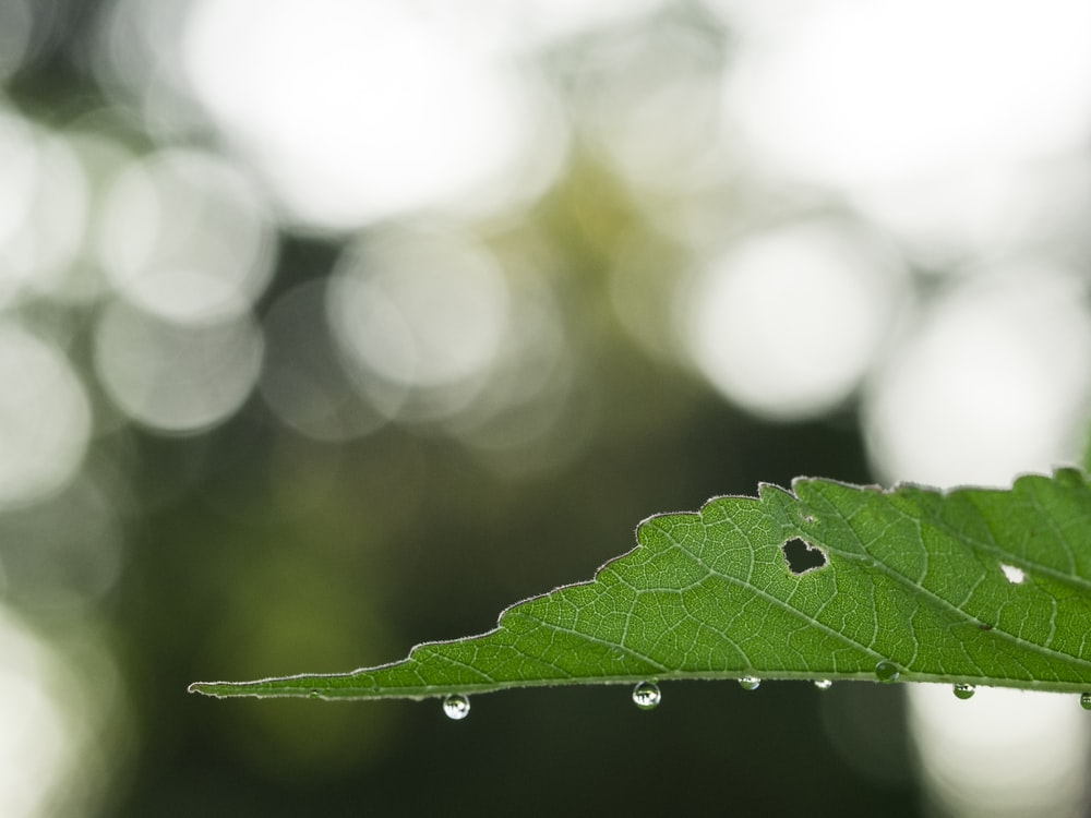focus photography of leaf