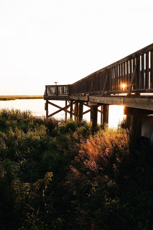 footbridge under plants near body of water
