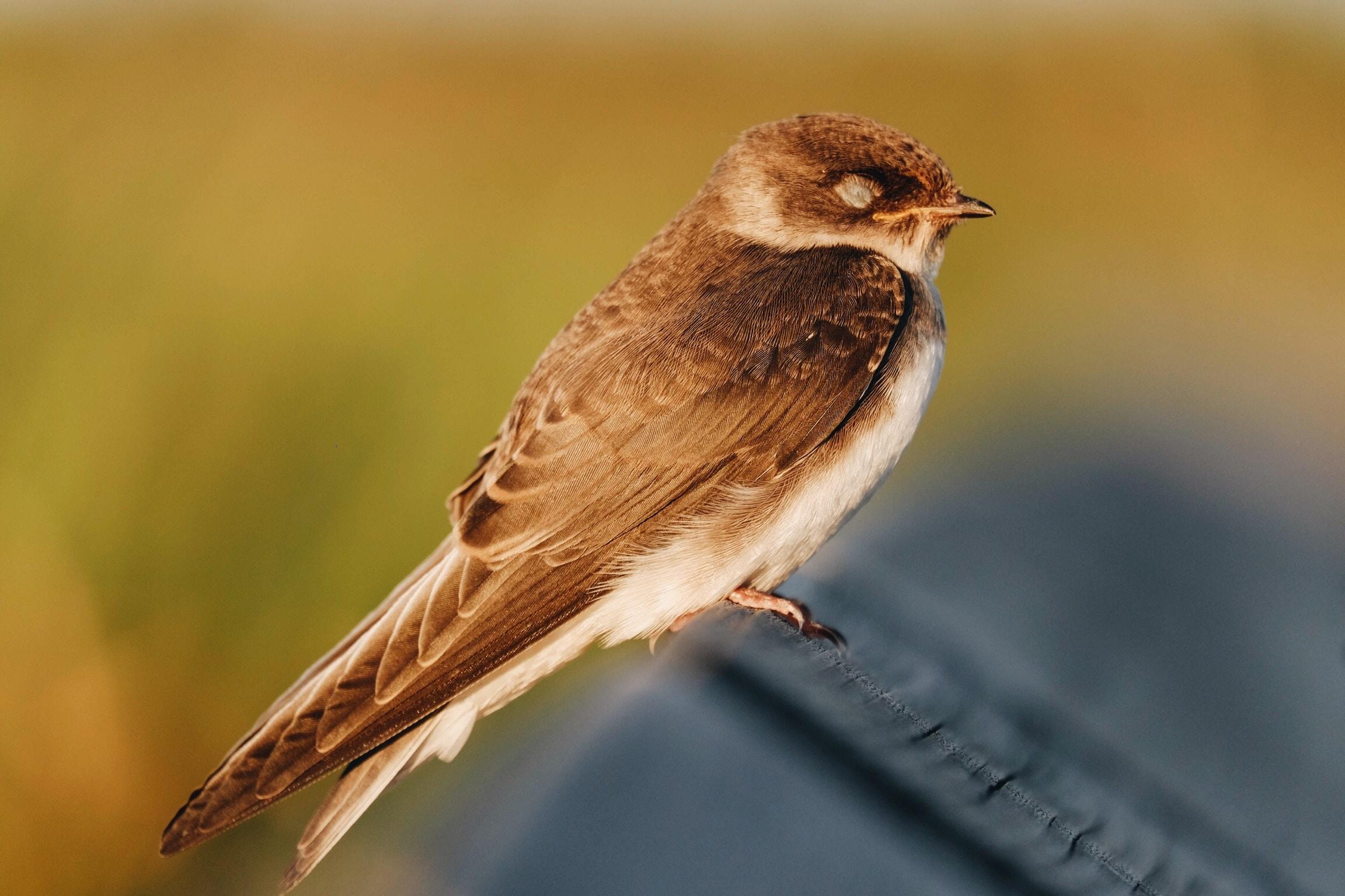 tilt shift lens photography of brown bird