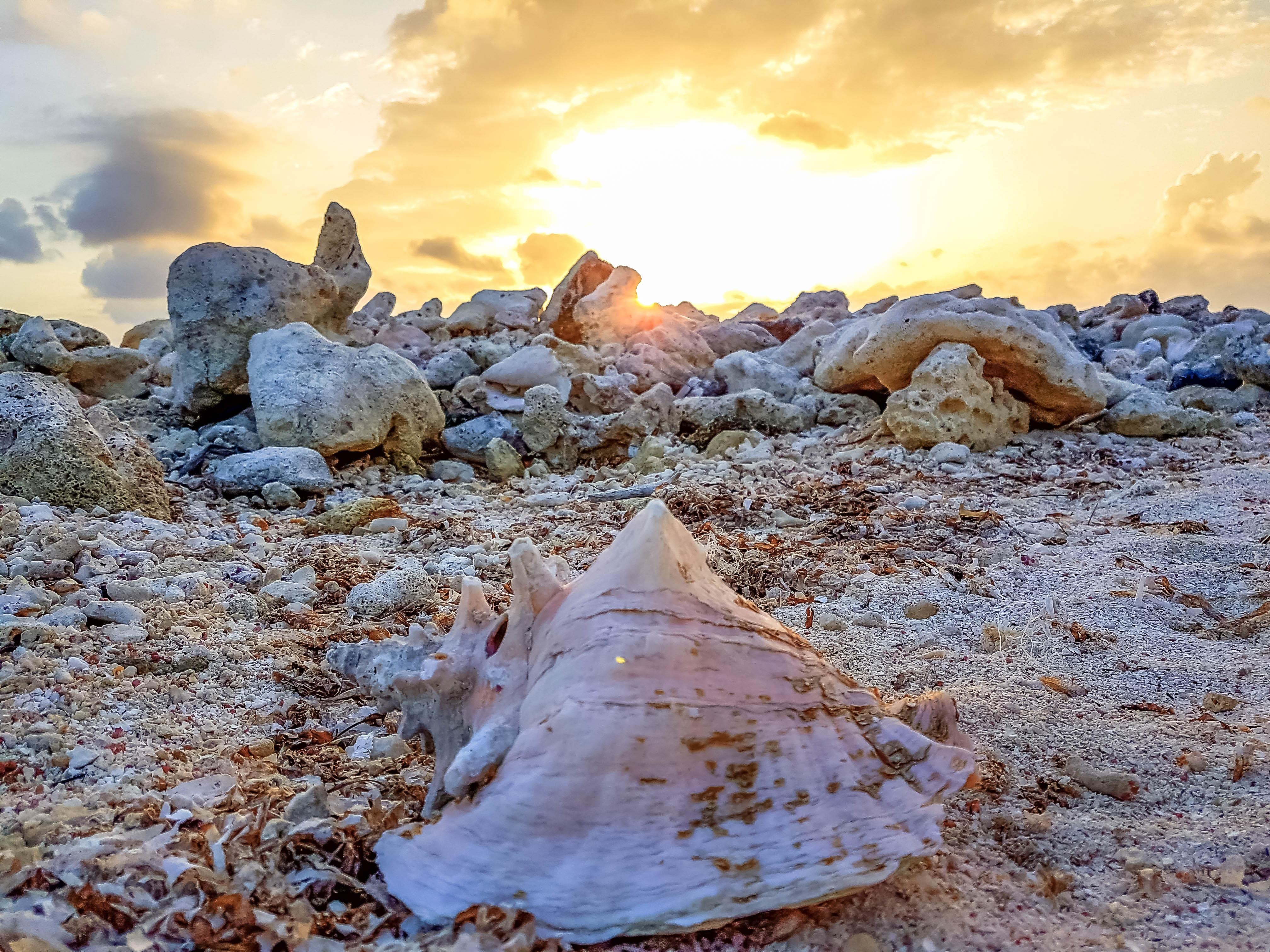 seashell at the mountain