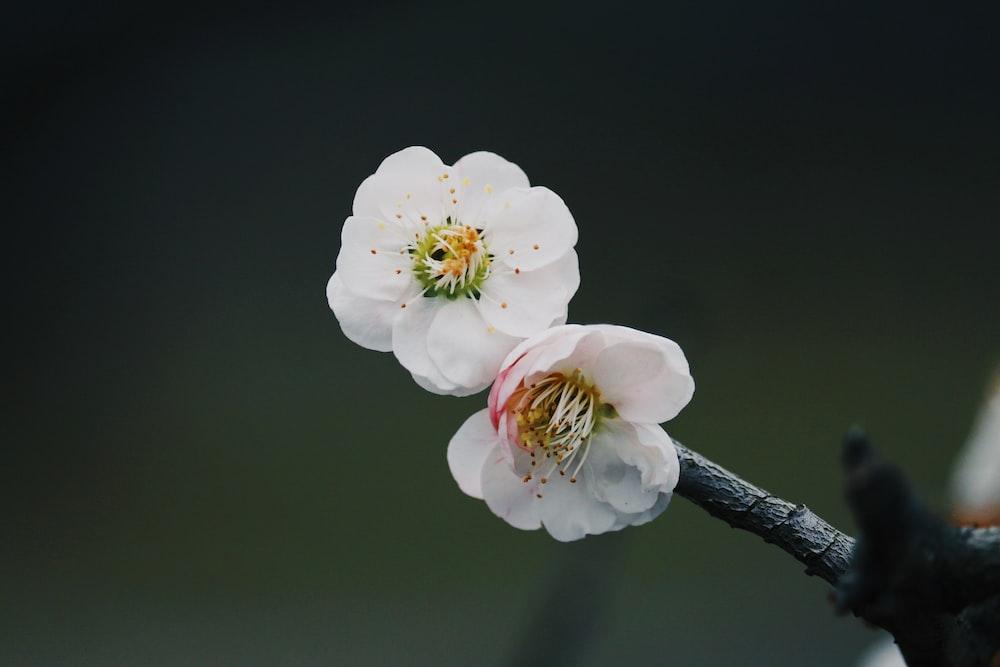 macro shot of white flowers