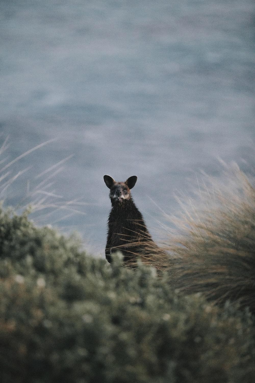 animal can be seen through shrub during daytime