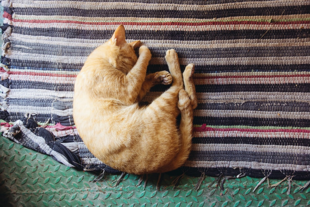 orange tabby cat leaning on multicolored striped mat