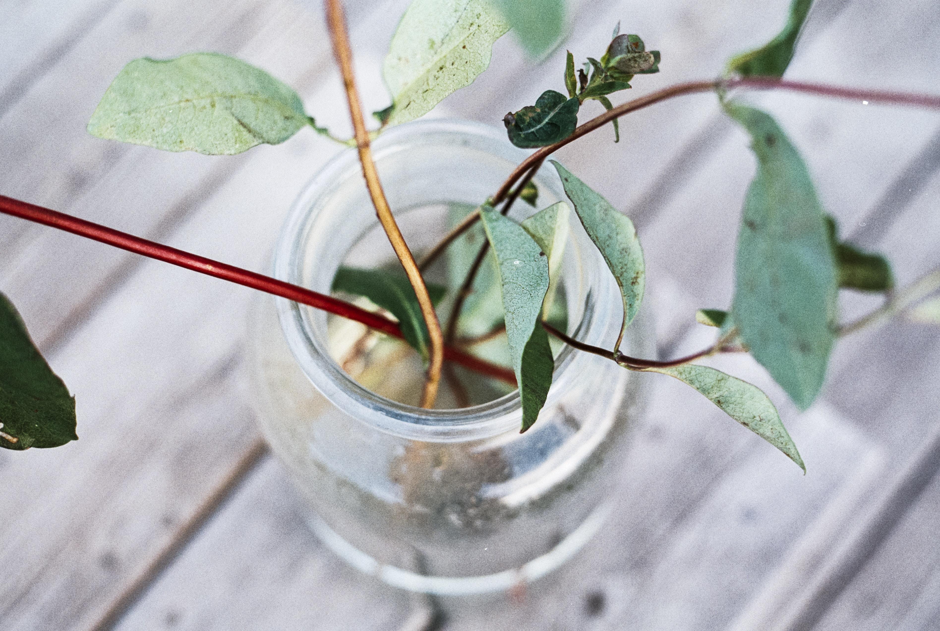 green leafed plant arrangement