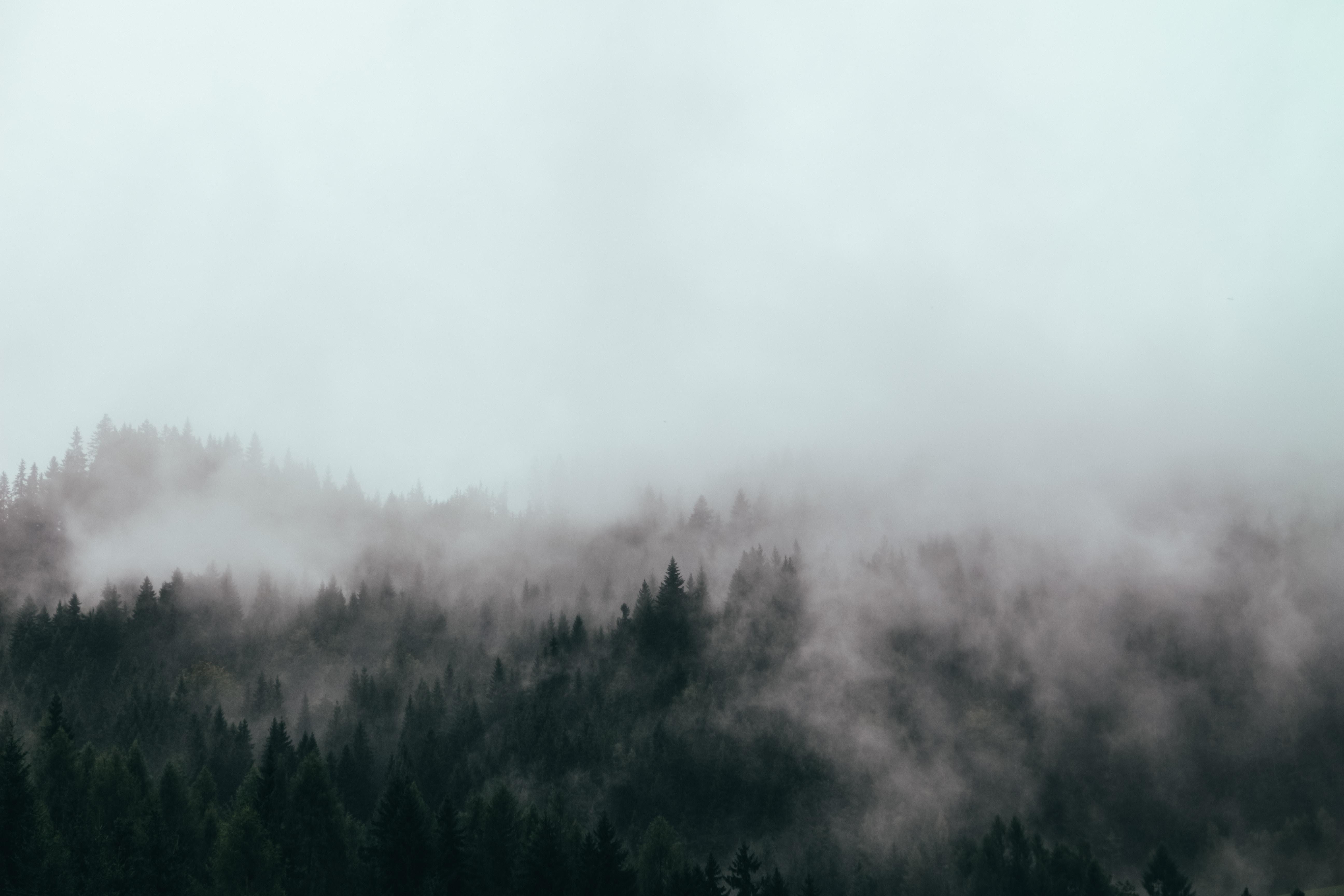 dense mist