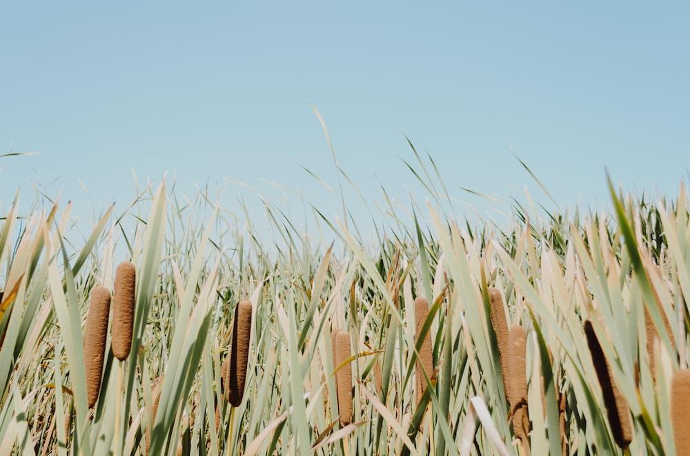green grass and blue sky horizon