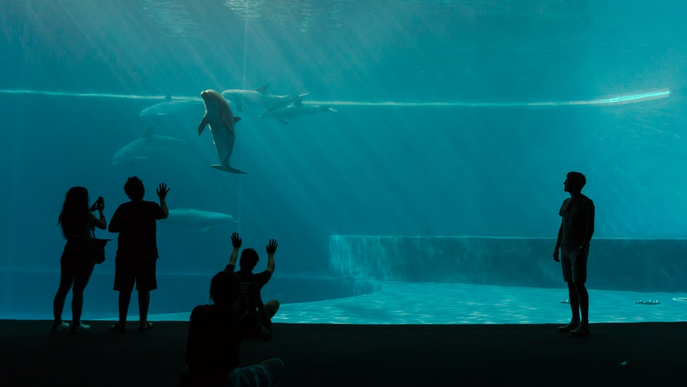 four silhouette of person's in front of aquarium