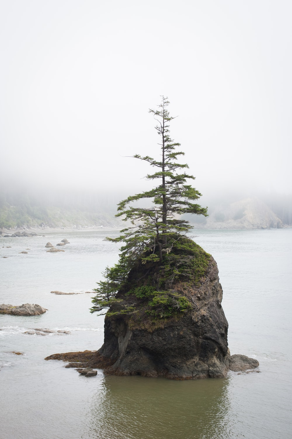 pine tree on top of gray boulder in the middle of body of water