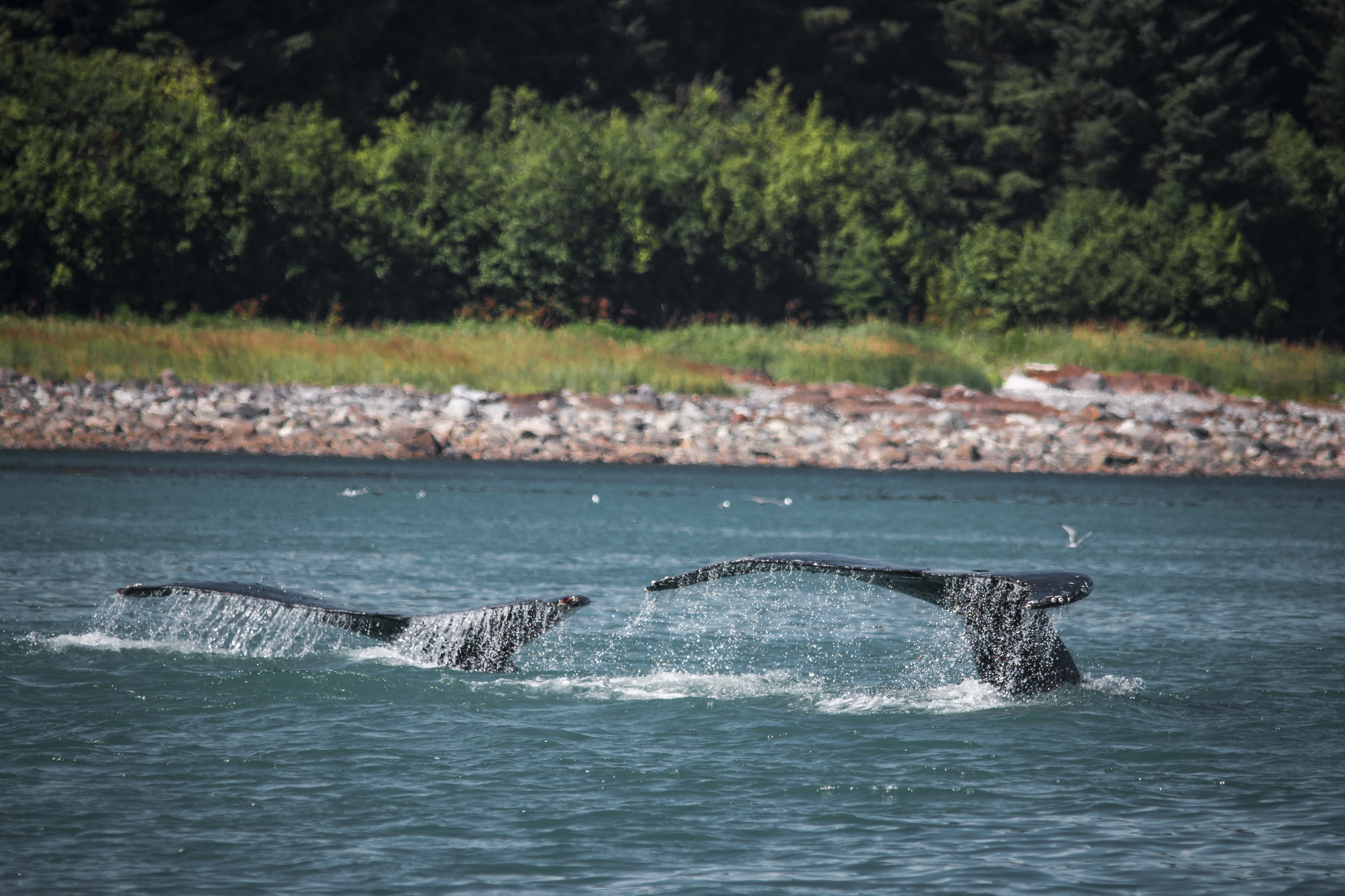 two whales near shoreline during daytime