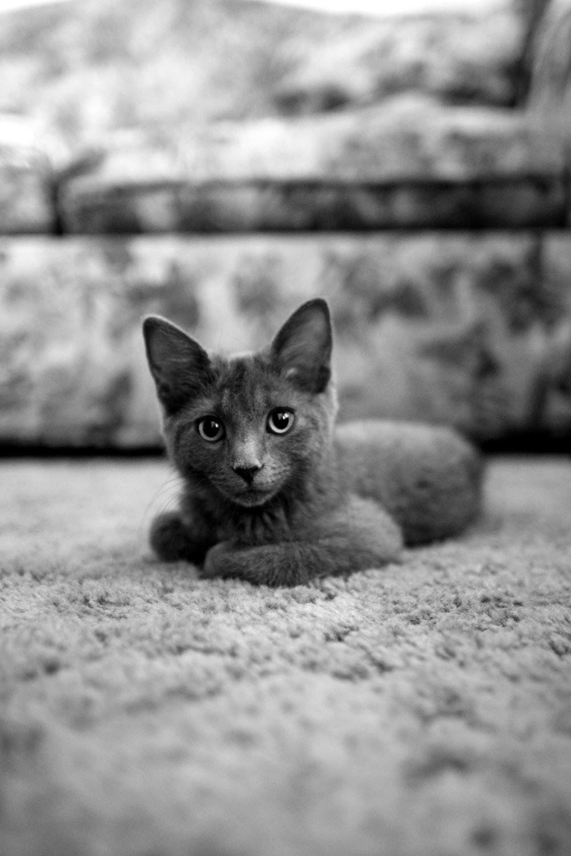 gray cat sitting on cloth