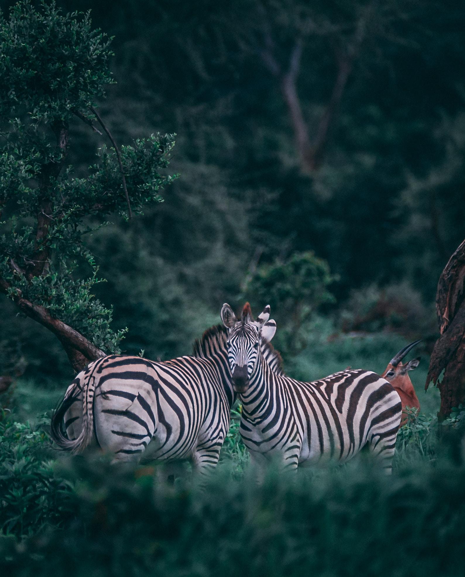 Wild like animals... love stories