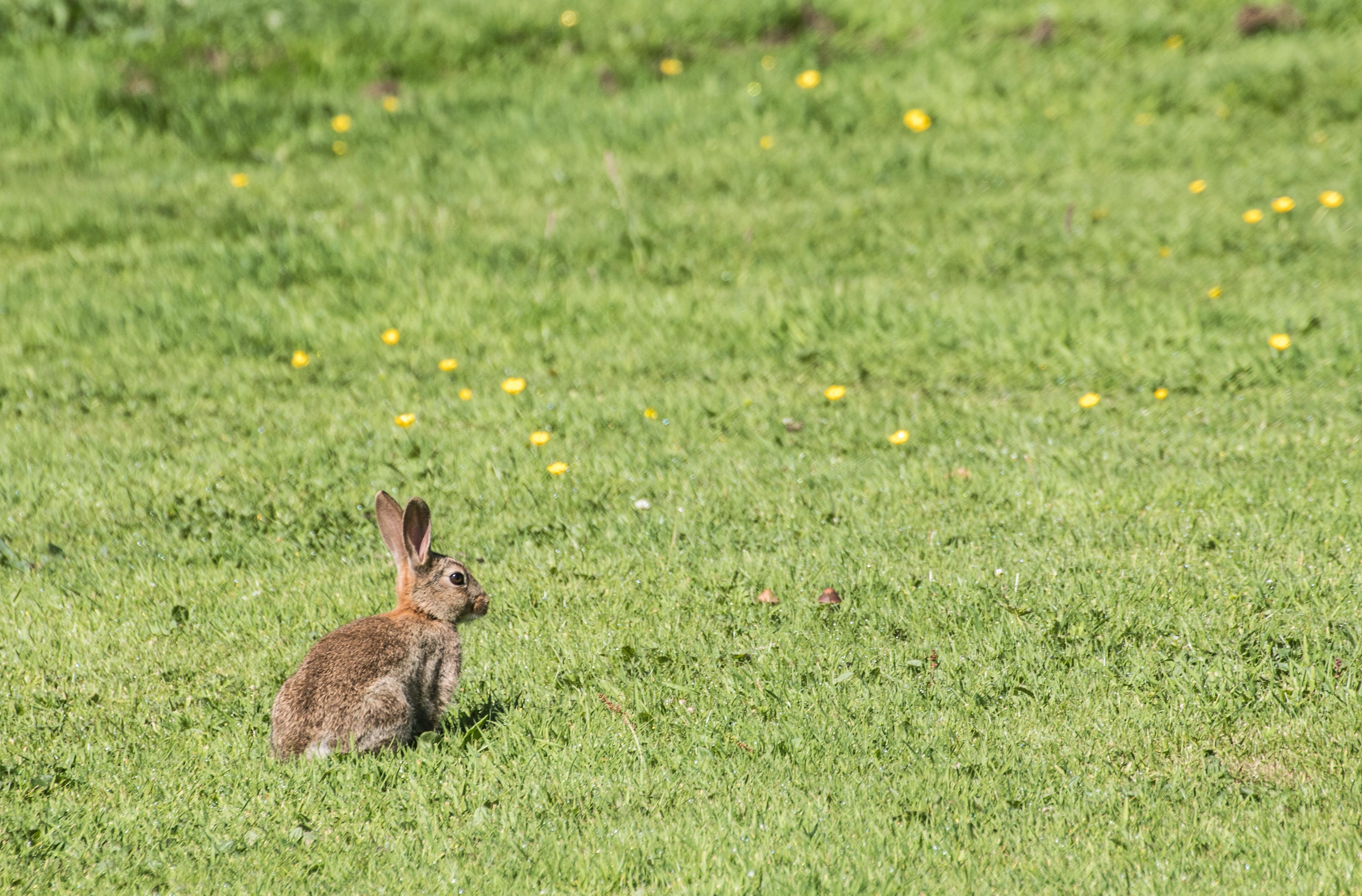 photo of rabbit on grass