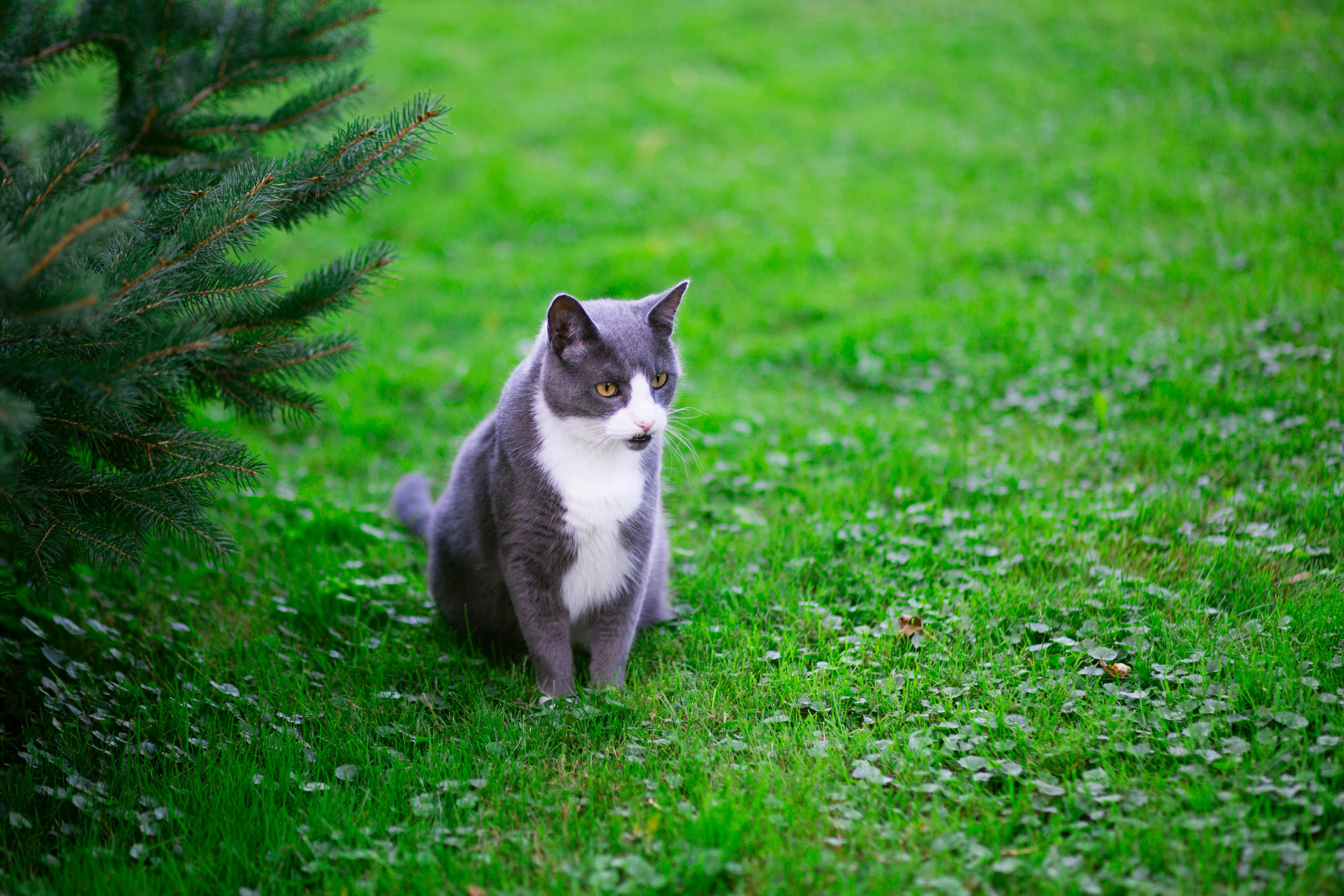 sitting gray and white cat near green leaf plant