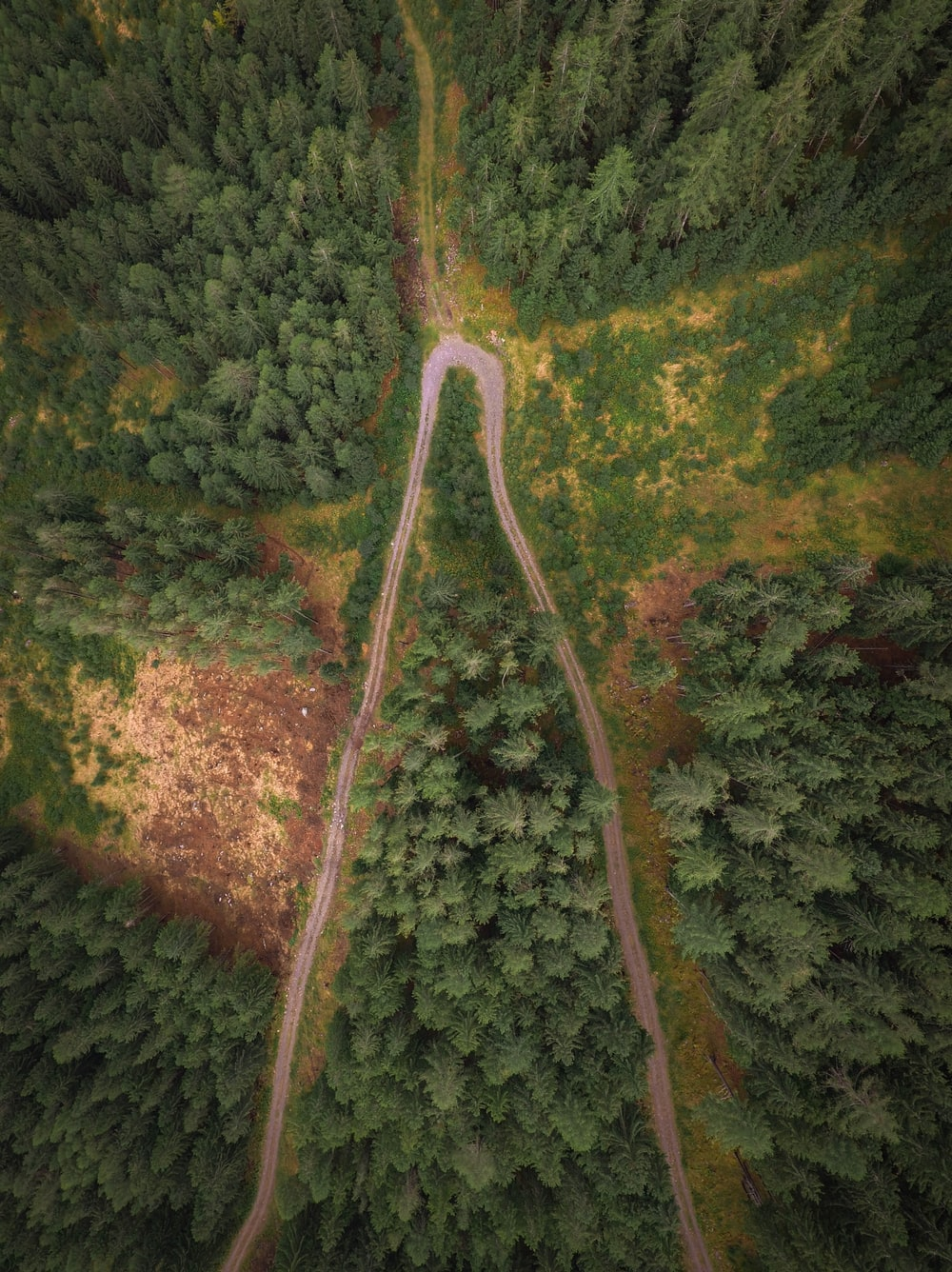 aerial photography of dirt road surrounded by trees at daytime