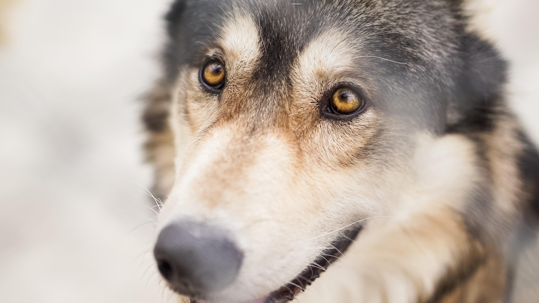 Wolf Cub dream-2018 stories